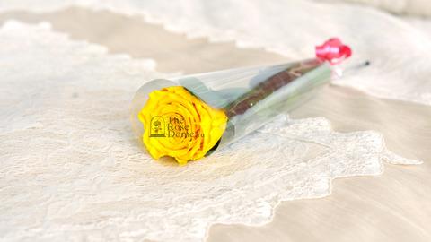 Роза на стебле Premium Оптом Высота*Бутон (37см*5-6см) Цвет желтая