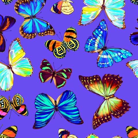 тропические бабочки_04