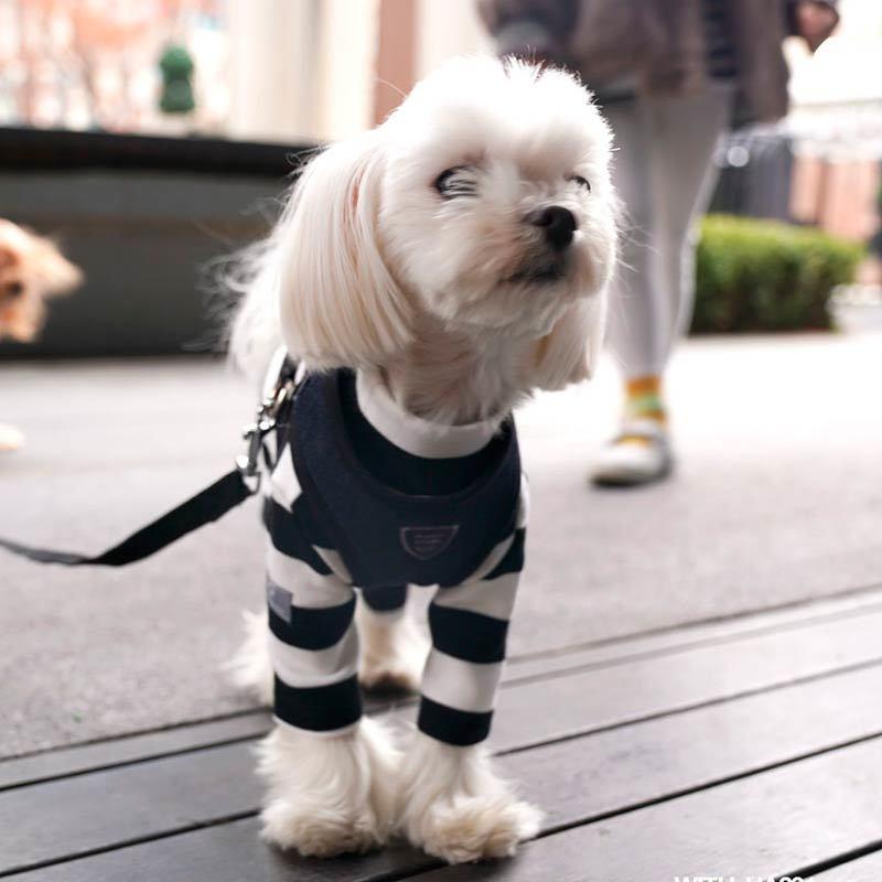 267 PA - Коcтюмы для собак