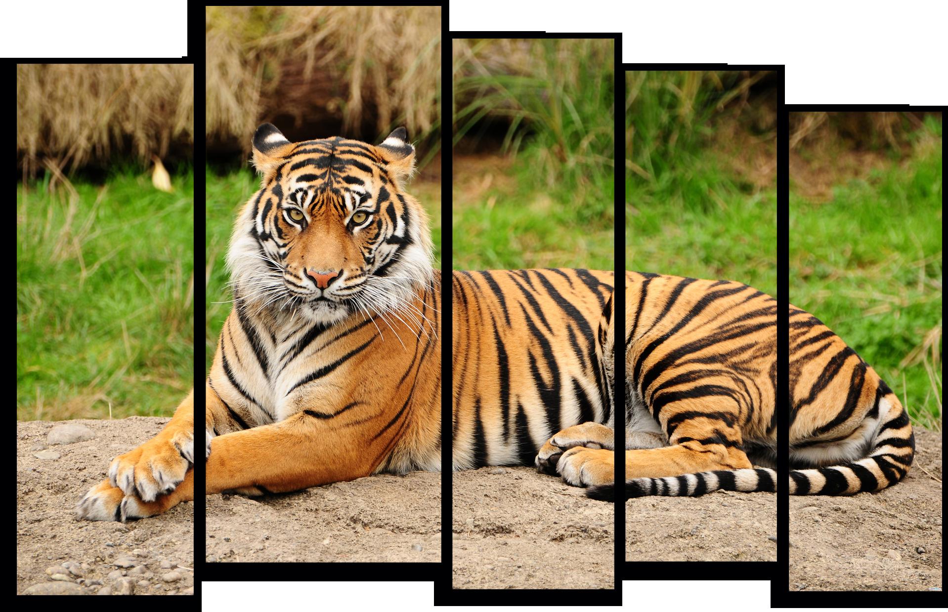 """Животные Модульная картина """"Грациозный тигр"""" М798.png"""