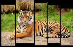 """Модульная картина """"Грациозный тигр"""""""