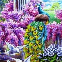 Картина раскраска по номерам 40x50 Величие павлина