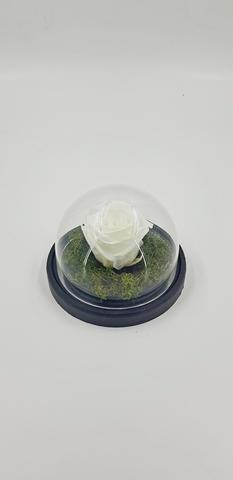 Роза MIMI 690 руб.Оптом. Выс*Диам*Бутон (10*12*4 см) . Цвет Белый.