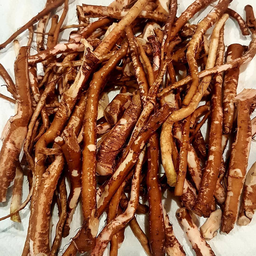 Травы Одуванчика корень taraxacum-root-7.jpg