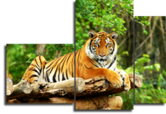 "Модульная картина ""Грация тигра в природе"""