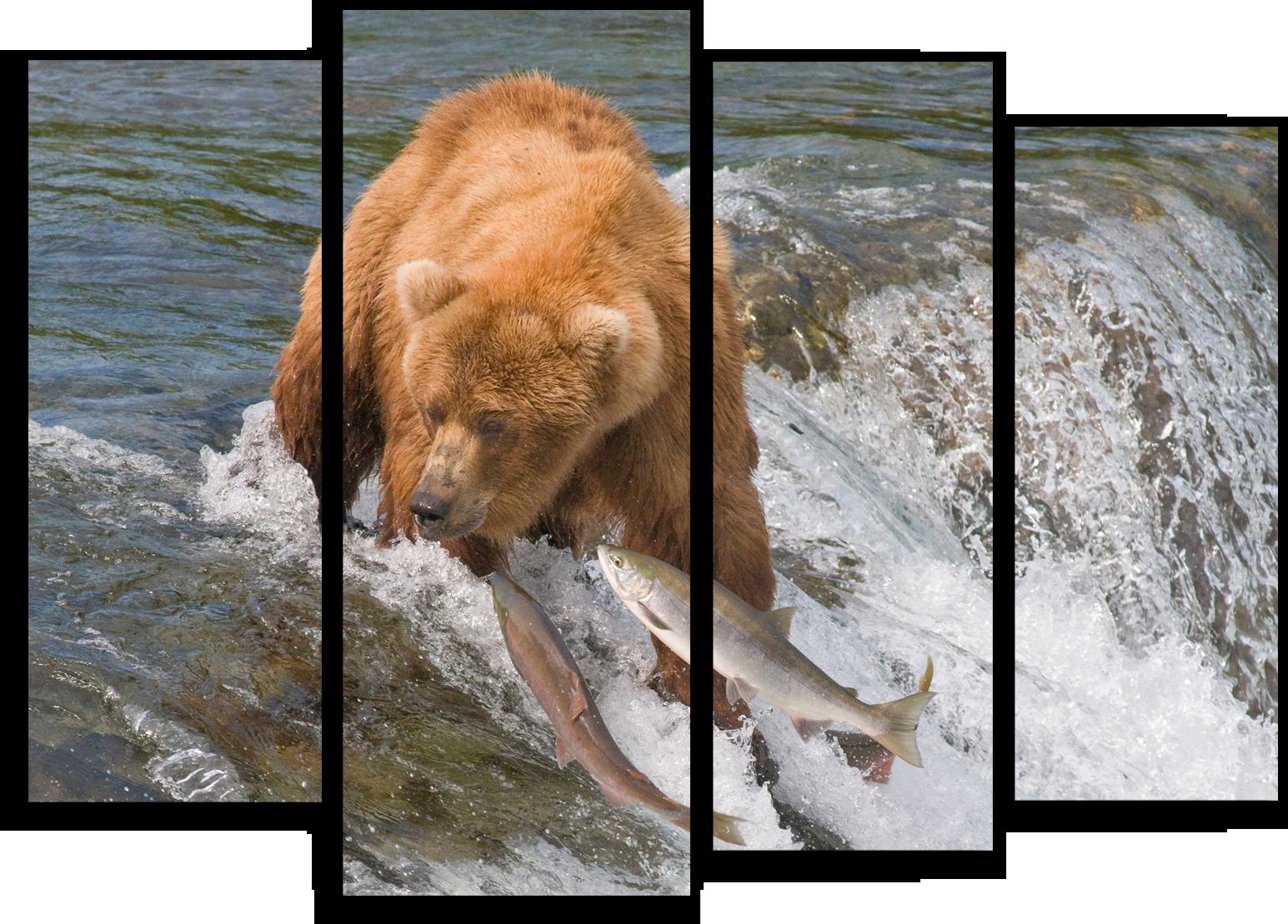 """Животные Модульная картина """"Медведь ловит рыбу"""" М516.png"""