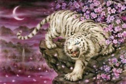 Картина раскраска по номерам 40x50 Тигрица на розовом фоне