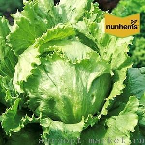 Nunhems Галера семена салата айсберг (Nunhems / Нюнемс) галера.jpg