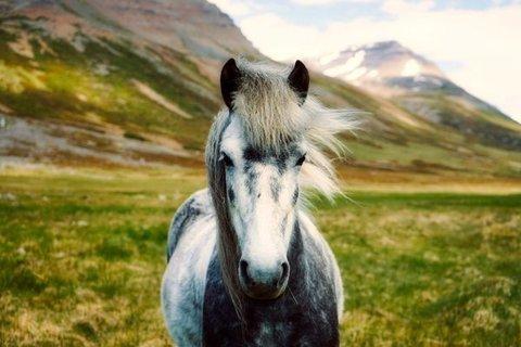 Алмазная Мозаика 50x65 Лошадь в горах