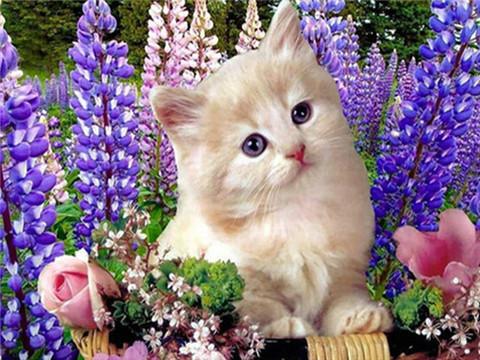 Алмазная Мозаика 50x65 Котенок в цветах