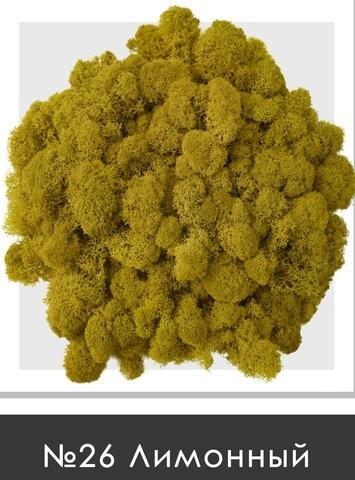 Стабилизированный мох (ягель) цвет №26 Лимонный
