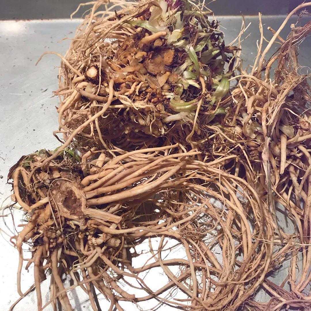 Травы Валерианы корень valeriana-root-3.jpg