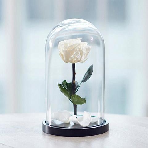 Роза в колбе белая (размер S, mini)