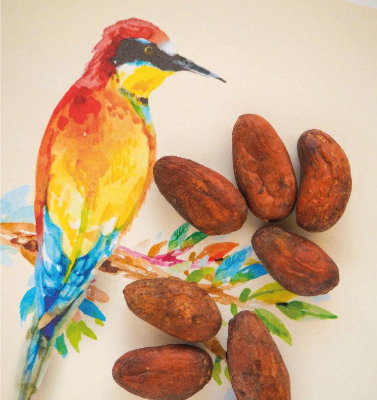 Какао-бобы цельные (Коста-Рика)