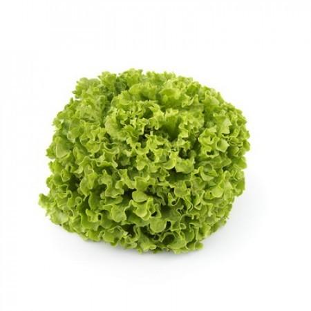 Rijk Zwaan Олмети семена салата батавия (Rijk Zwaan / Райк Цваан) ОЛМЕТИ.jpg
