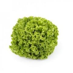 Олмети семена салата батавия (Rijk Zwaan / Райк Цваан)