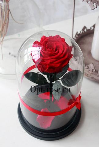Роза в колбе Premium Оптом(Выс*Диам*Бутон 27*15*7-8см)Цвет красная