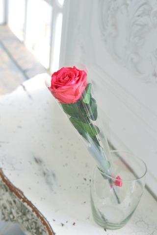 Роза на стебле King Оптом Высота*Бутон (50см*7-8см) Цвет фуксия