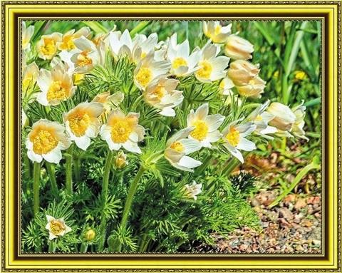 Алмазная Мозаика 40x50 Полевые цветы вблизи (арт. SGA1759 )