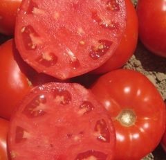Оберон F1 семена томата индетерминантного (Clause / Клос)