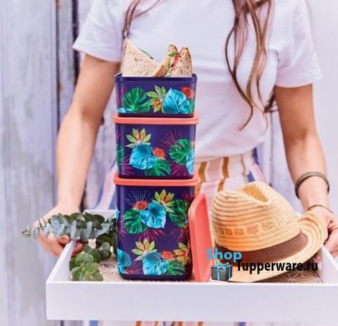 Райский сад набор контейнеров кубикс