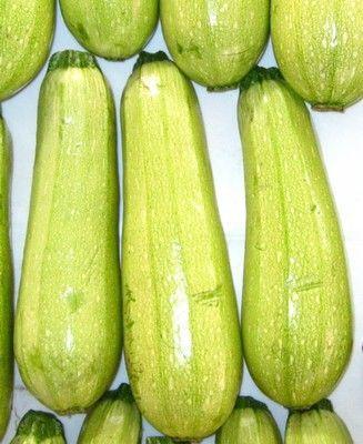 Кабачок Амджад F1 семена кабачка (Seminis / Семинис) Амджад_F1_семена_овощей_оптом.jpg