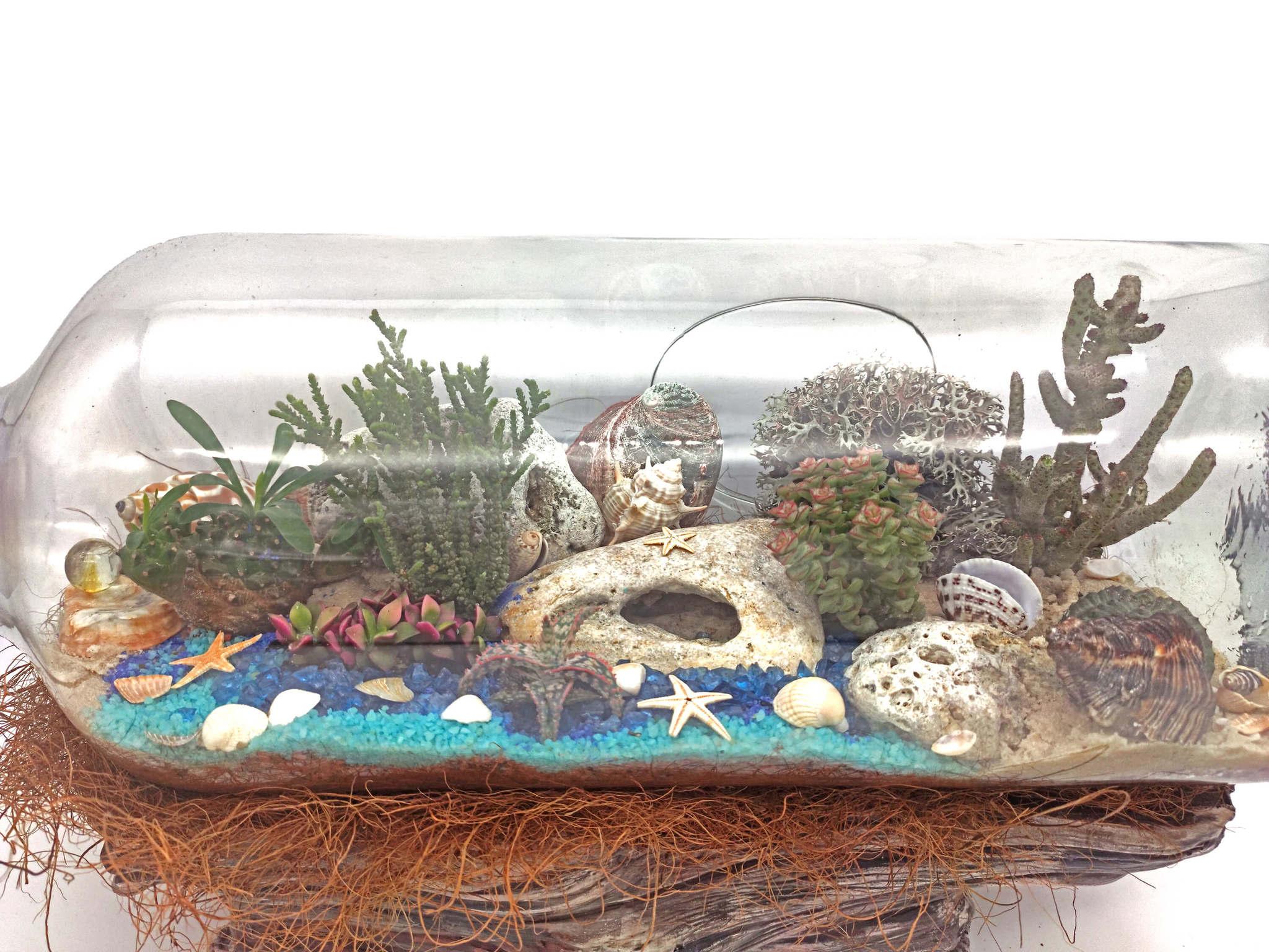 Остров погибших кораблей - композиция из живых суккулентов в банке (фотография 2)