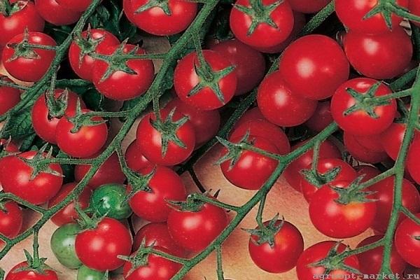 Каталог Бон Бон F1 семена томата индетерминантного (Гавриш) бон-бон.jpg