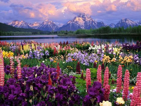 Алмазная Мозаика 40x50 Поле цветов на фоне гор