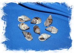 Морские ракушки для рукоделия в морском стиле