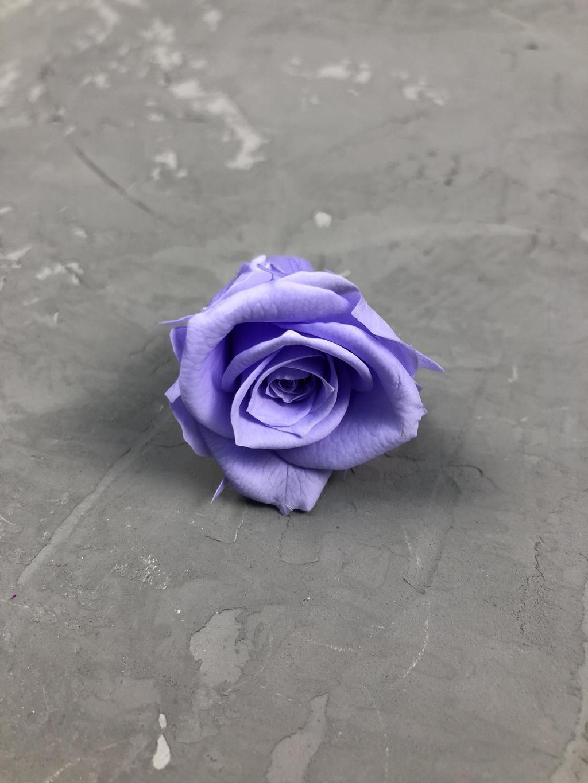 Роза классическая лавандово-фиолетовая d=3-3,5 см