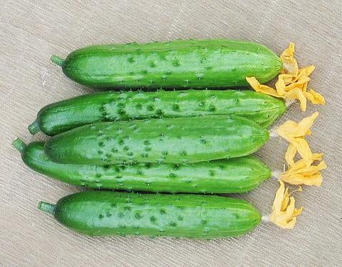 Огурцы салатные ТСХ 1кг