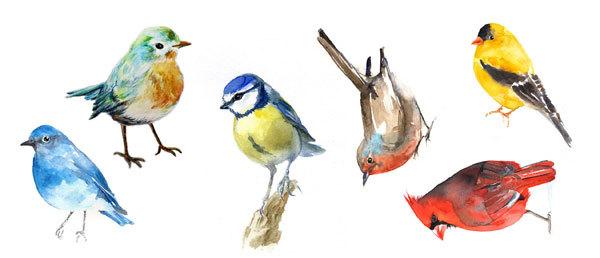 Водорастворимая бумага Яркие птицы