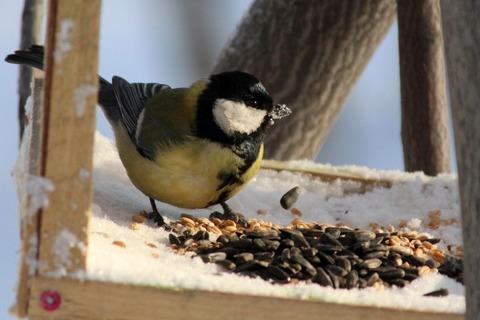 Семечки для птичек