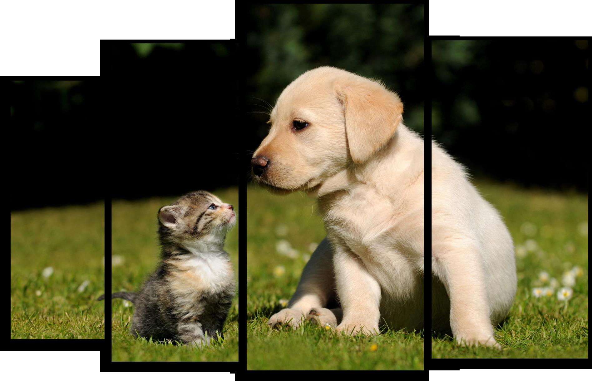 """Животные Модульная картина """"Кошка и собака"""" М536.png"""