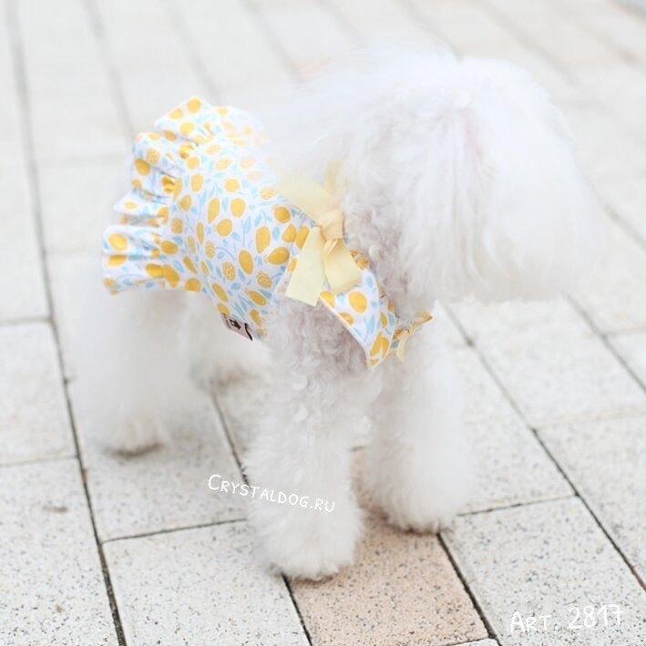2817 BH - Платье для собак
