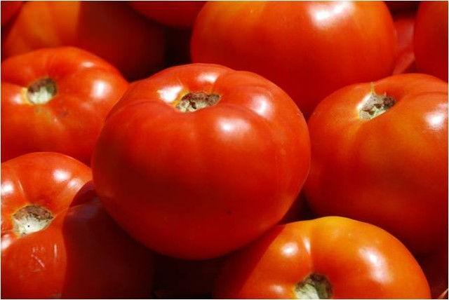 Каталог Болена F1 семена томата индетерминантного (Syngenta / Сингента) болена.jpg