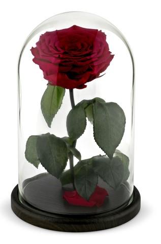 Вечная роза в стеклянной колбе бордовая (Люкс)