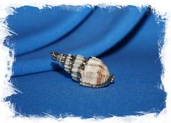 Ракушка-подвеска для бижутерии