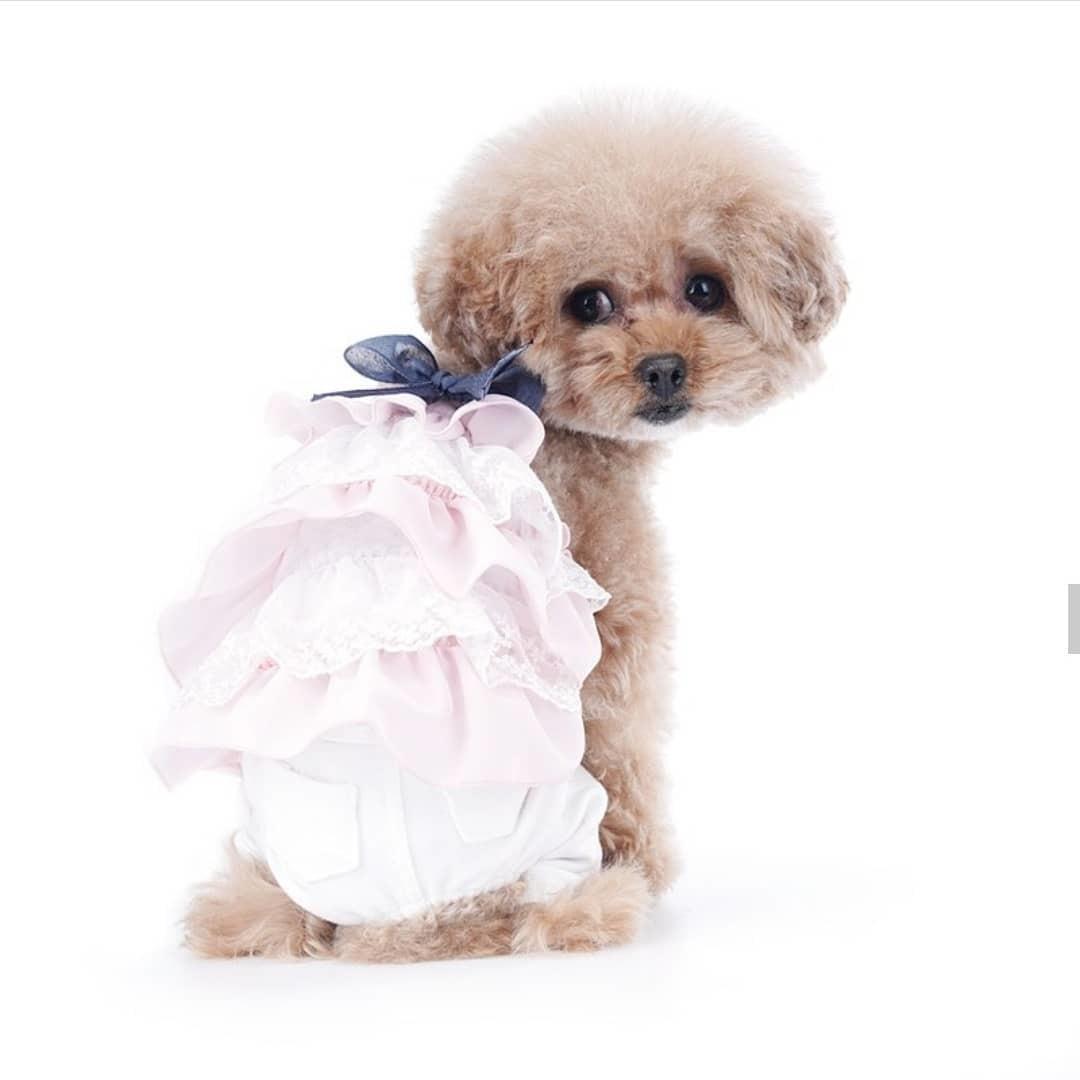 розовый костюм для собаки купить