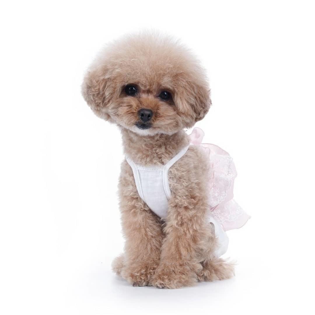 летний костюм для собаки