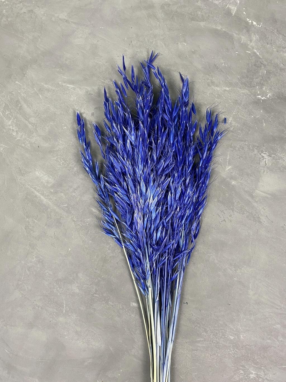 Овес синий