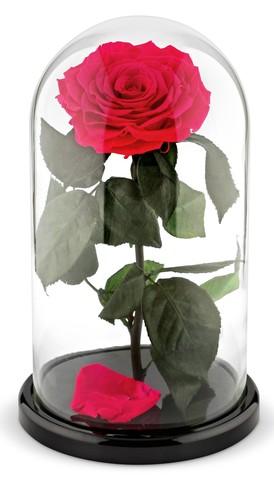 Вечная роза в стеклянной колбе фуксия (Люкс)