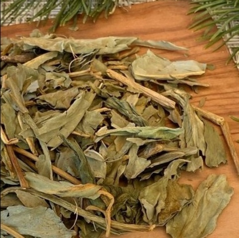 Вахта трехлистная, лист