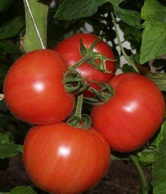 Томат Пинк Уникум F1 семена томата индетерминантного (Seminis / Семинис) ПИНК_УНИКУМ_F1__Pink_Unicum_F1__семена_овощей_оптом.JPG