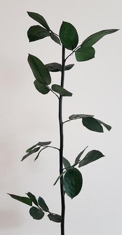 Стабилизированный Стебель с листвой 60см Эквадор