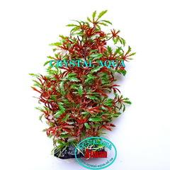 Растение Атман AL-080A, 30см