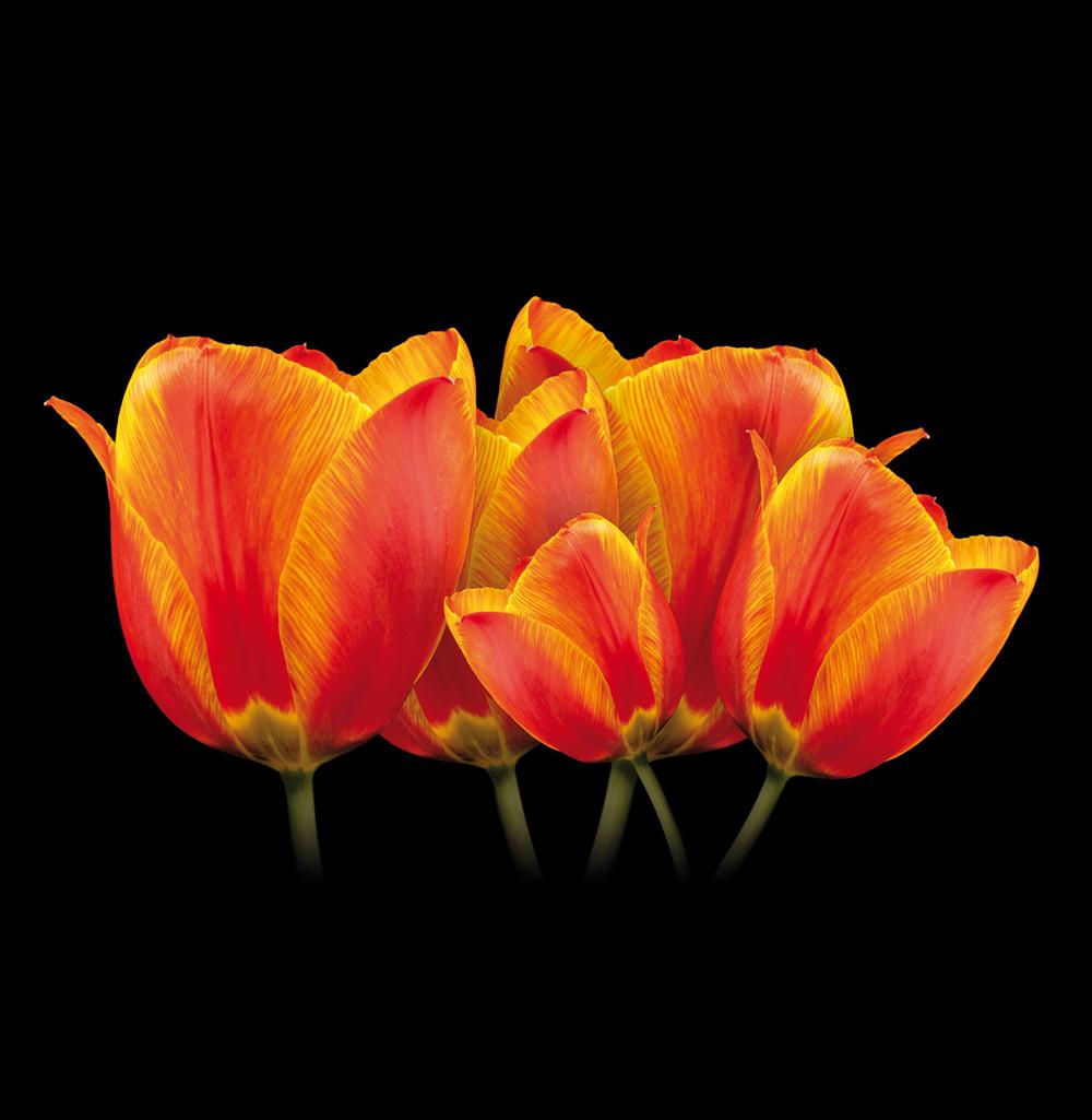 Папертоль Солнечные тюльпаны — главное фото сюжета.