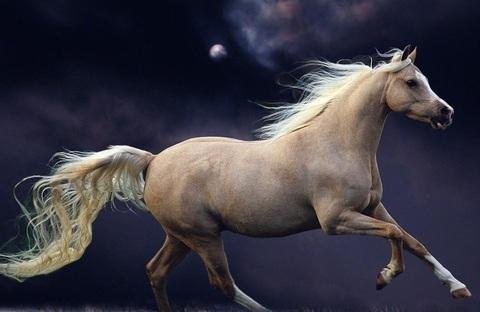 Алмазная Мозаика 40x50 Белый конь на  черном фоне (арт. 2PAV757)