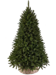 Triumph tree ель Лесная красавица 3,65 м зеленая